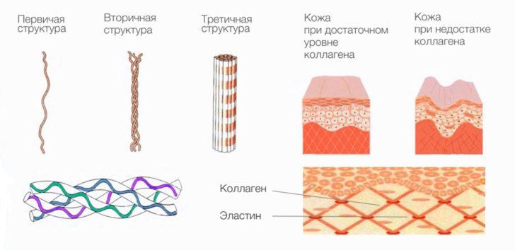 Структура коллагена (схема)