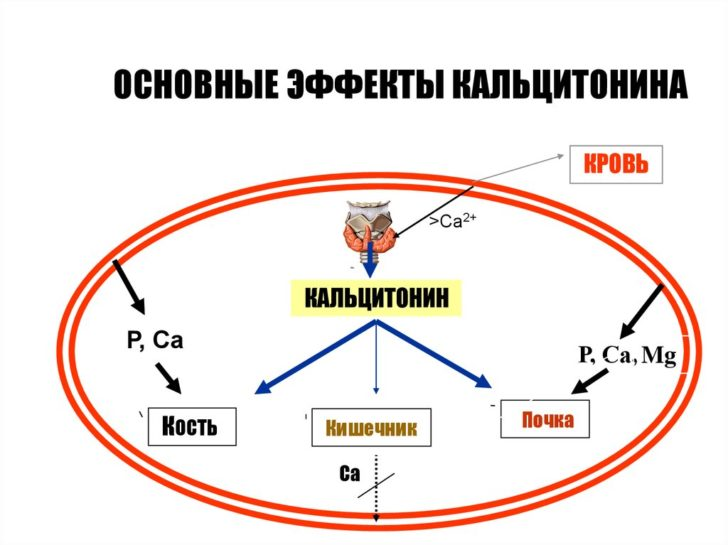 Кальцитонит