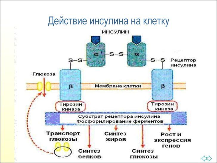 Механизм действия инсулина (схема)