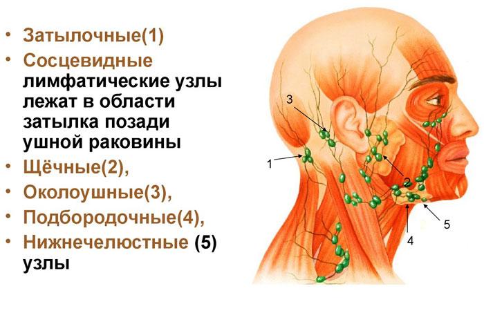 Лимфатические узлы шеи