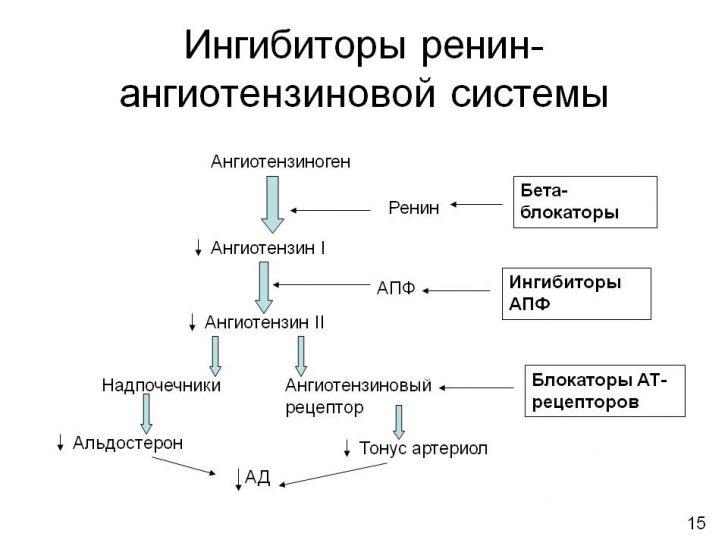Механизм антигипертензивного действия сартанов (схема)