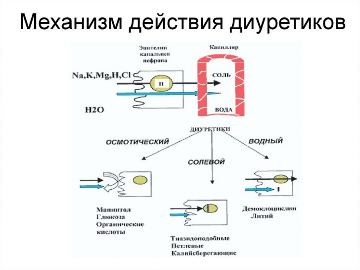Механизм действия диуретиков (схема)