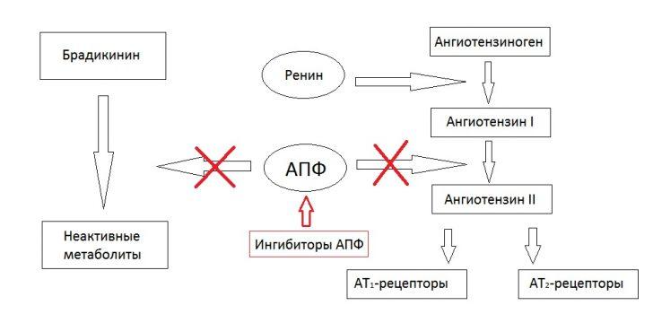 Механизм действия ингибиторов АПФ (схема)