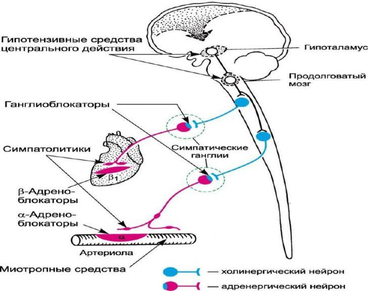 Механизм действия препаратов центрального действия (схема)