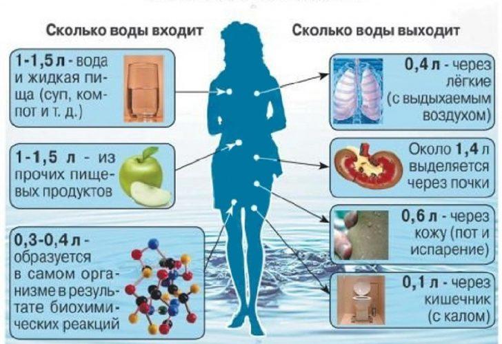 схема поступления и выделения жидкости