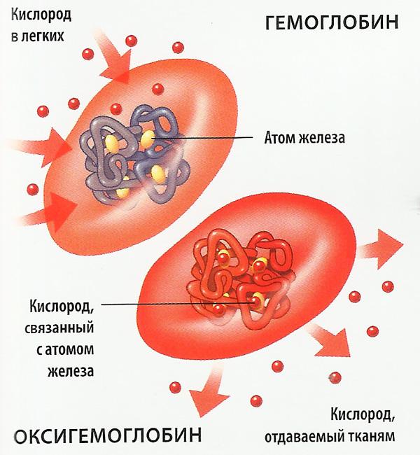 Газообмен в крови (схема)