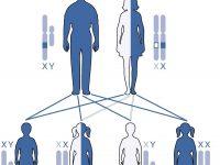 Наследование гена гемофилии (схема)
