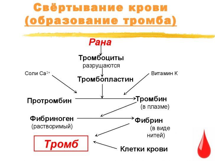 Процесс свёртывания крови (схема)
