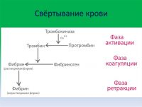 Свёртывание крови (схема)