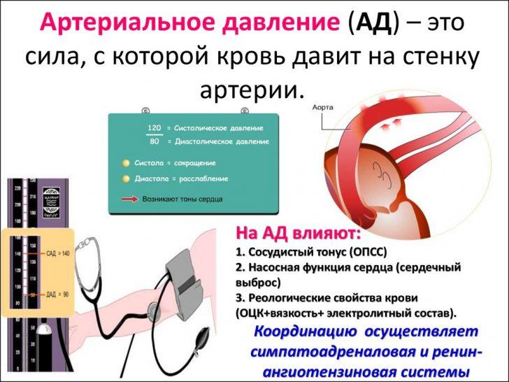Факторы, формирующие давление в артериальных сосудах