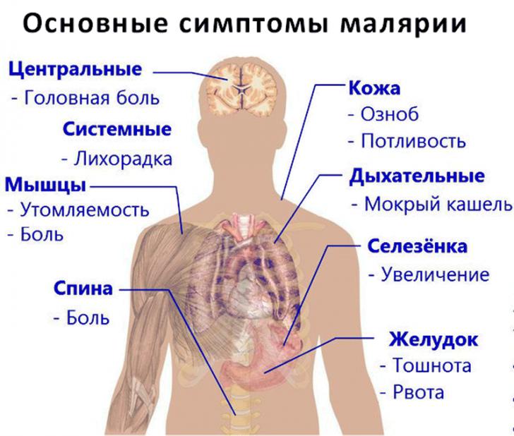 Малярия (схема)