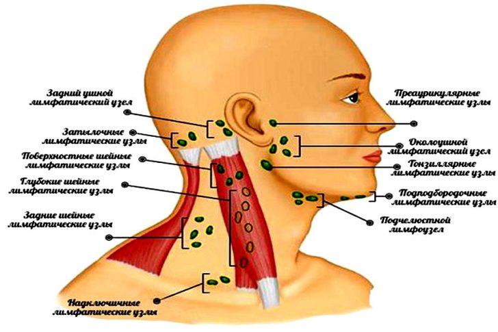 Схема расположения шейных лимфоузлов