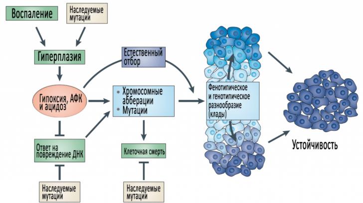 Канцерогенез (схема)