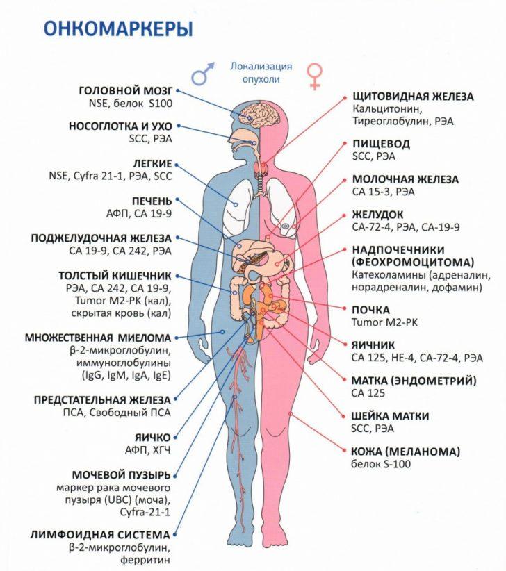 Онкомаркеры (схема)