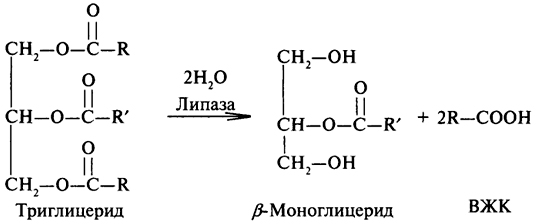 Ферментативный гидролиз