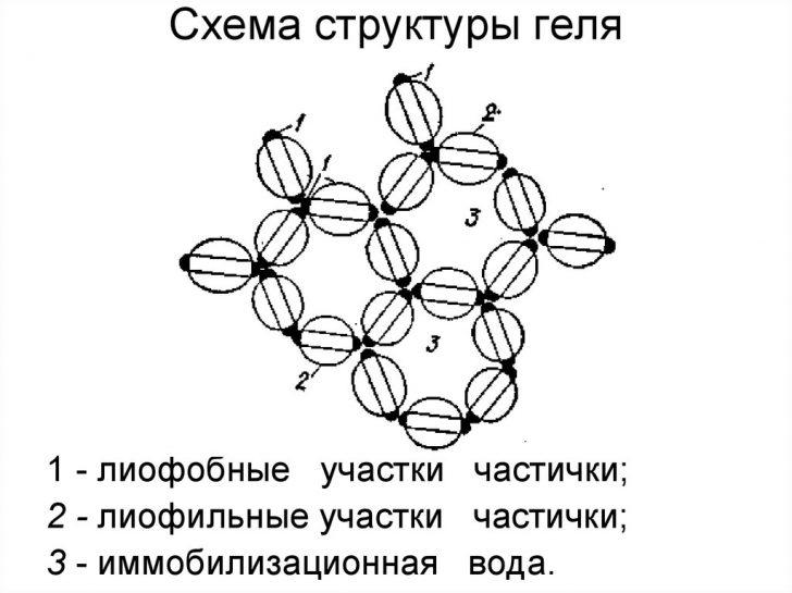 Структура геля (схема)